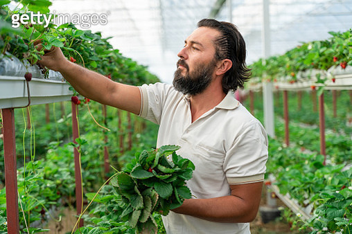 Man works in the greenhouse - gettyimageskorea