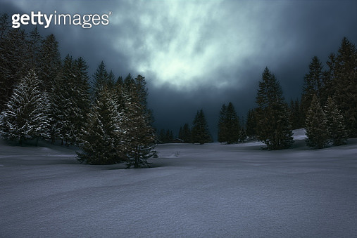 Forest Winterlandscape in the Swiss Alps - gettyimageskorea