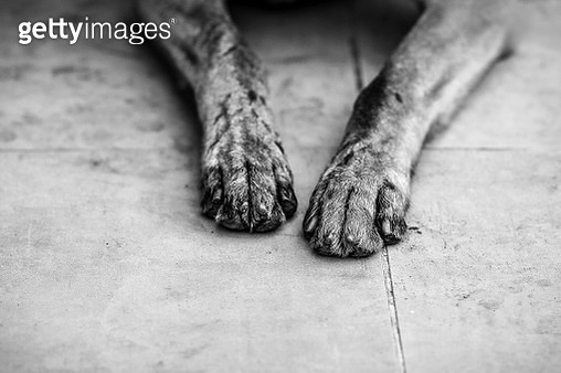Close-Up Of Dog Leg - gettyimageskorea