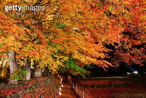 autumn night - gettyimageskorea