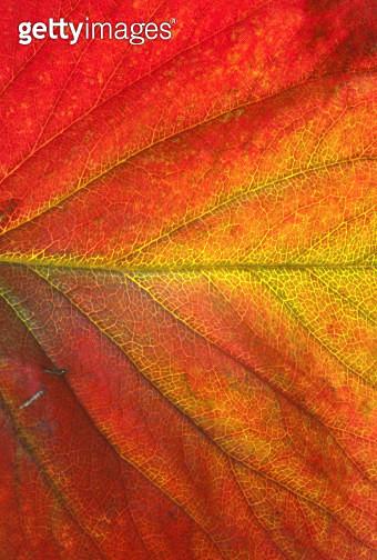 Leaf of strawberry plant - gettyimageskorea