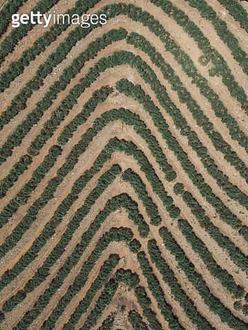 Agricultural patterns as seen from above, France - gettyimageskorea