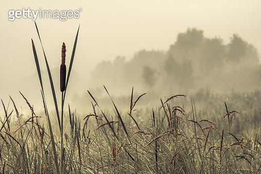 Foggy morning - gettyimageskorea