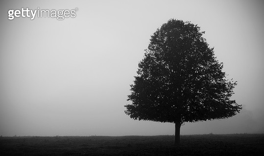 Out of the Fog - gettyimageskorea