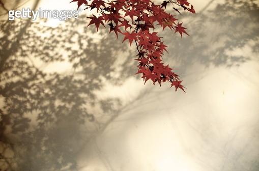 Autumn leaf - gettyimageskorea