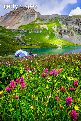 Camping tent in field of wildflowers next to Ice Lake, Ice Lakes Trail, Colorado, USA - gettyimageskorea