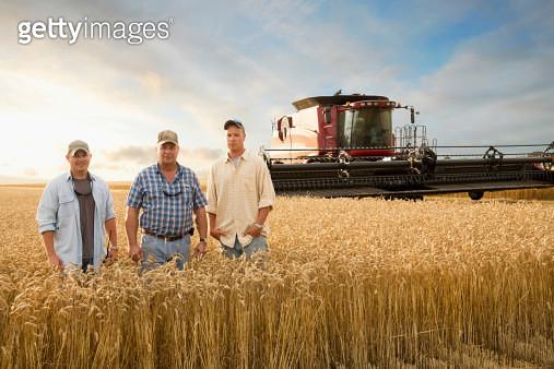 Two generations of Caucasian farmers in wheat field - gettyimageskorea