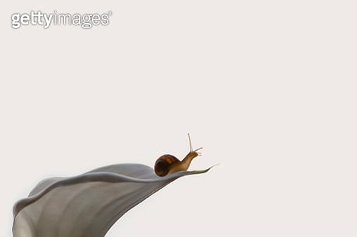 Snail in a flower - gettyimageskorea