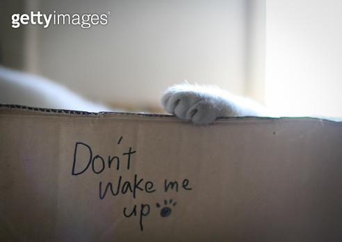 Cat is sleeping in the box it is written with -Don't wake me up. - gettyimageskorea