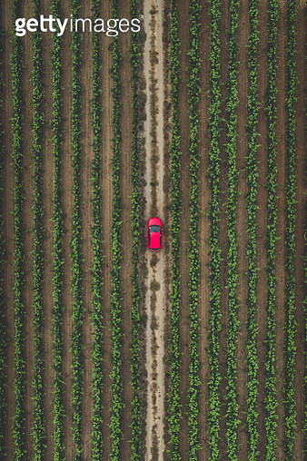 Drone shot of a car on a dirt road amongst vineyards, France - gettyimageskorea