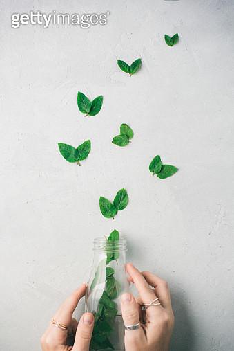 Close up of human hands holding a jar of butterflies - gettyimageskorea