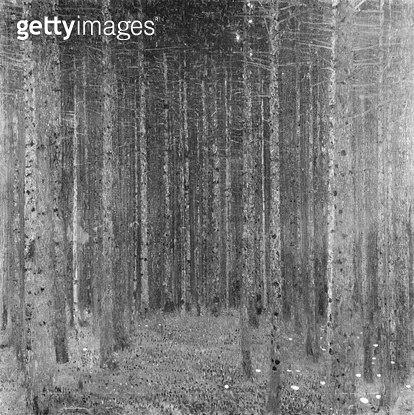 <b>Title</b> : Fir Forest I, 1909 (oil on canvas) (b/w photo)<br><b>Medium</b> : oil on canvas<br><b>Location</b> : Private Collection<br> - gettyimageskorea