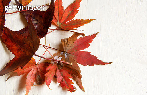 Many autumn leaves over a white background. Still life. - gettyimageskorea