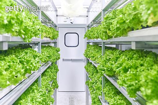 Growing Vegetables in Cargo Container - gettyimageskorea
