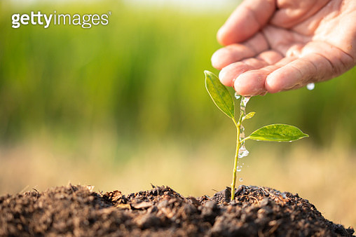 Plant growing on soil with hand watering over sunlight and green background - gettyimageskorea