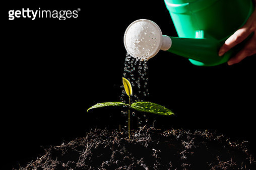 Close-Up Of Hand Watering Plant Against Black Background - gettyimageskorea