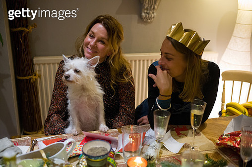Family at a table post-Christmas lunch playing with their dog. - gettyimageskorea