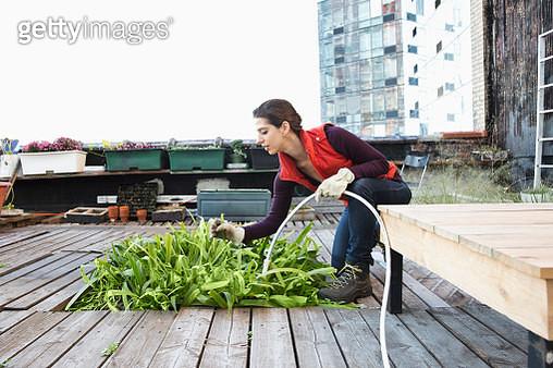 Woman watering plants in urban rooftop garden - gettyimageskorea