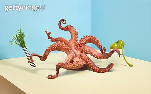 Balanced Diet Octopus - gettyimageskorea