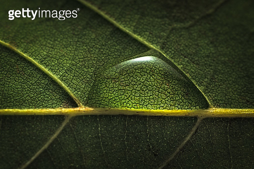 Close-up of water drops on leaf. - gettyimageskorea