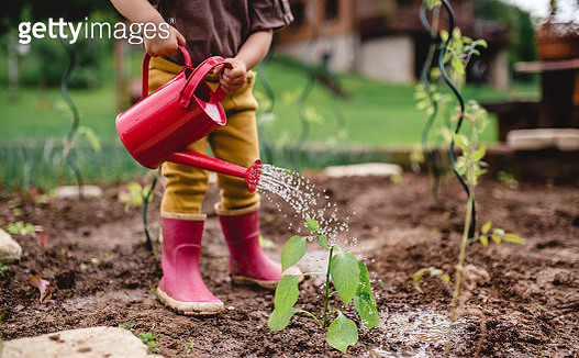 A little toddler in the garden, watering plants with can. - gettyimageskorea