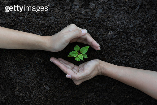 Close Up Plant in Female Hands. Care of the Environment. Ecology concept - gettyimageskorea