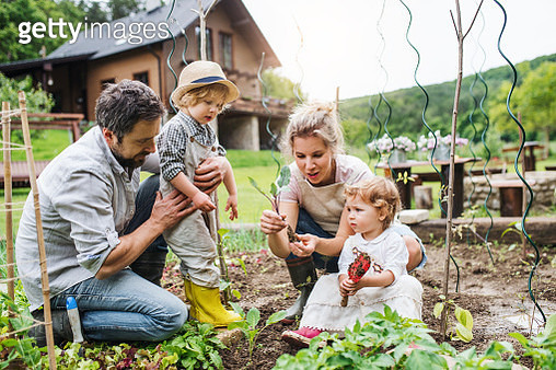 A father, mother, son and daughter in the garden, planting seedlings. - gettyimageskorea