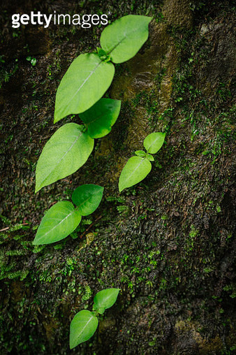 Green sprout and moss on rock in rainy season - gettyimageskorea