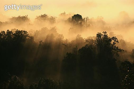 Sunbeam Through Mist And Wood - gettyimageskorea