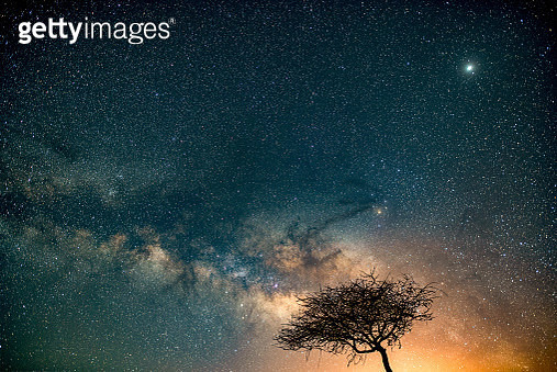 Low angle view of silhouette of trees against star field at night,Umm Lajj,Saudi Arabia - gettyimageskorea