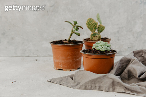 Decorative green houseplant in pot - gettyimageskorea