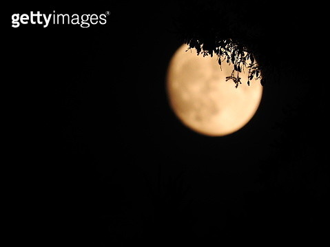 Bright blurred orange toned full moon shining through detailed silhouetted leaves - gettyimageskorea