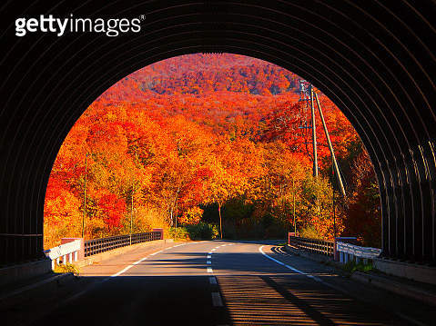 Autumn Colors from inside of Tunnel. The trees are aflame with autumn colors. Aomori City, Japan-October 27, 2012 - gettyimageskorea