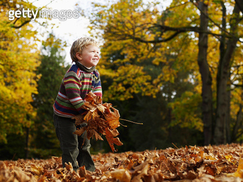 Boy (3-4) playing with leaves in woodland - gettyimageskorea