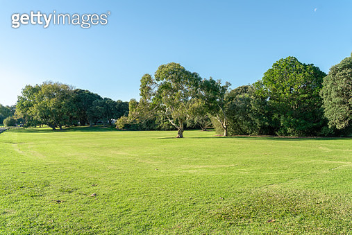 Grassland sky and grass background in a park - gettyimageskorea