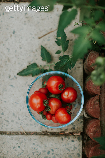 Tomatoes in bowl - gettyimageskorea