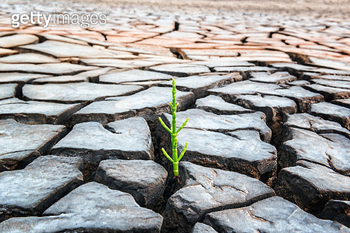 A green sprout that was survived on the cracked ground - gettyimageskorea