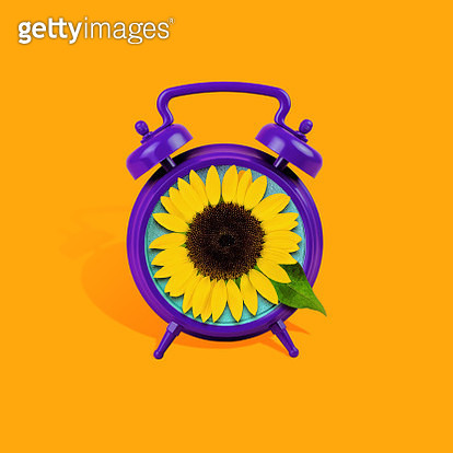 Purple alarm clock with a fresh sunflower face on orange background. - gettyimageskorea