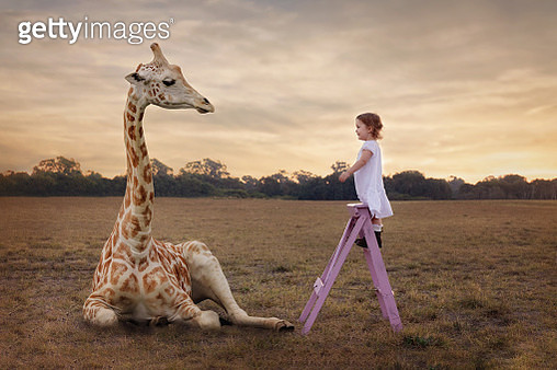 The Girl And The Giraffe - gettyimageskorea
