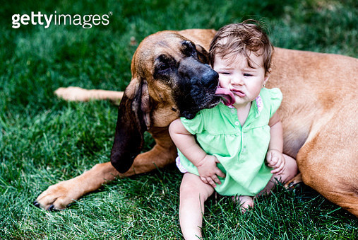 baby gets slobbered on by big affectionate dog - gettyimageskorea