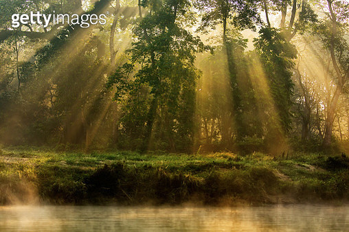 Sunny forest early in the morning - gettyimageskorea