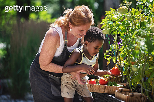 Mother and son harvesting vegetables from the garden - gettyimageskorea