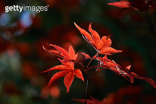 Red on Red 1 - gettyimageskorea