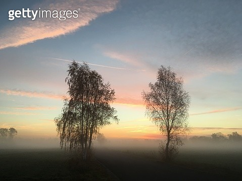 Silhouette Trees On Landscape Against Sky During Sunset - gettyimageskorea