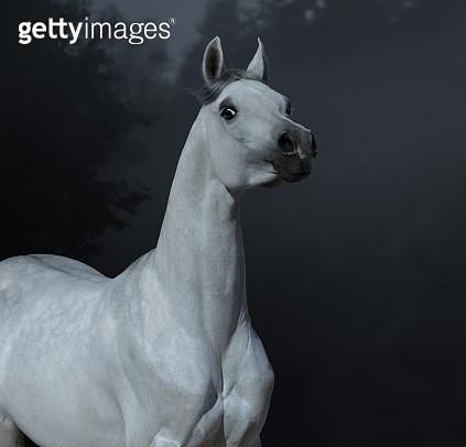 Graceful statuary Arabian stallion in twilight forest. - gettyimageskorea