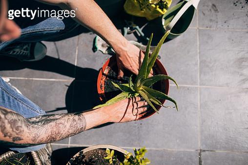 Gardening time - gettyimageskorea