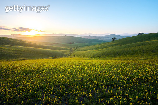 Perfect field of spring grass,Tuscany,Italy - gettyimageskorea