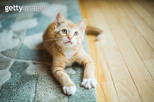 Cute Little Kitten - gettyimageskorea