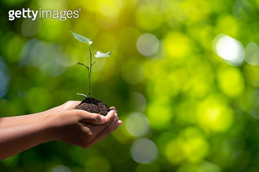 Environment earth day In the hands of trees growing seedlings. Bokeh green background male hand holding tree on nature field grass forest conservation concept. - gettyimageskorea