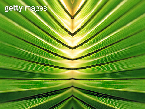 Image manipulation of a tropical pattern creates mirror image. - gettyimageskorea